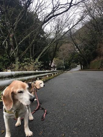 今日は元気良く散歩してくれました!