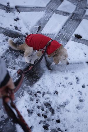 雪の上でおちっこ