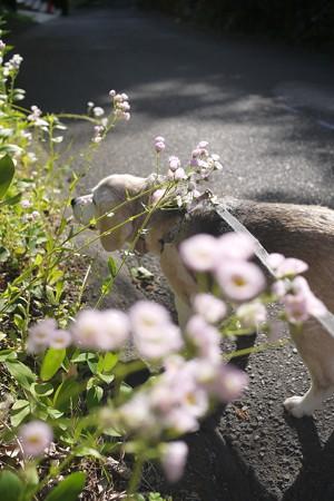 こーゆー前ボケの写真好きなんだよね、そして自然な感じのうみ姫クンクン