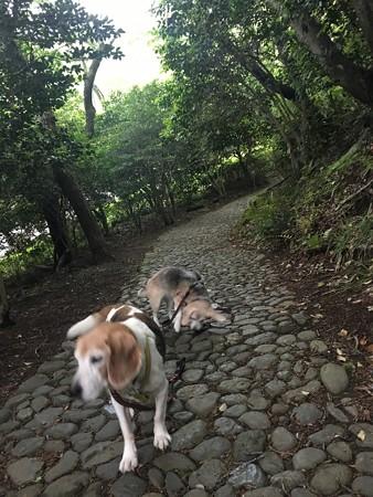 懐かしい小道in姫の沢@マリうみ