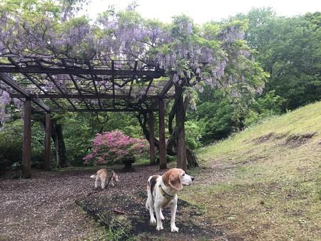 藤の木とマリうみin姫の沢@マリうみ