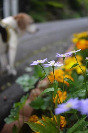 紫色のお花とマリン