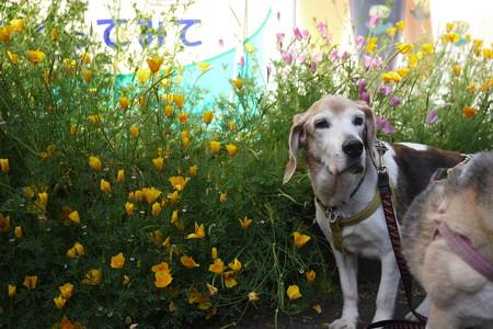 お花とマリン、、、