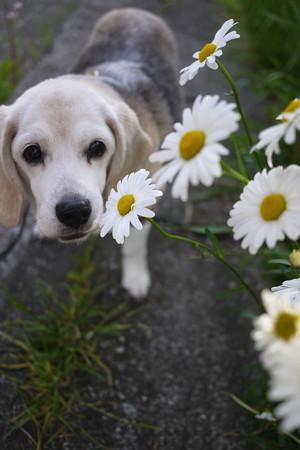 あたちは本当にどんなお花でも合いまちゅわ
