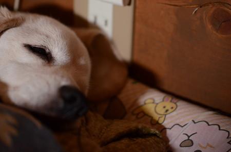 ぐー、、おやちゅみなちゃい@Nikon D7000