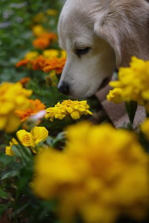 いいね~、色鮮やかなお花だと燃えてくるよ!