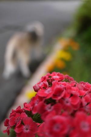 赤いお花とボケボケビーグル