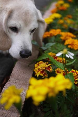 うみちゃんは、本当にお花が似合います
