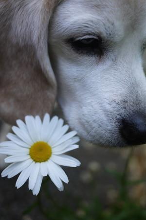 またまたお花とうみちゃん、、なんですが目が怒ってるぞ(汗)