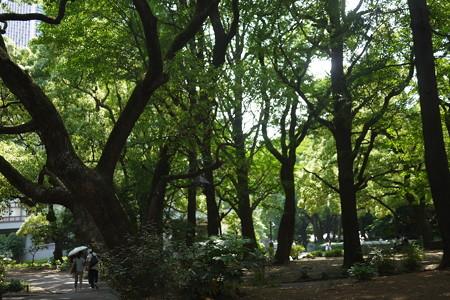 日比谷公園も大木がいっぱい