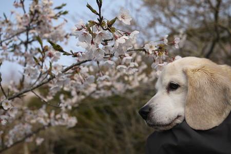 抱っこしてくれたお陰でひゃーーー最高!うみちゃんと桜の最高ショットが撮れました