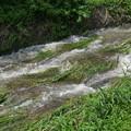 Photos: 流れが強く泥水です@函南町柿沢川