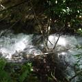 Photos: 函南町柿沢川からさらに上流の川を見て来ました
