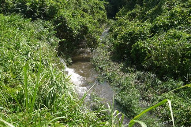 さらに上流へいってみます。場所によって流れの強弱がありました@函南町柿沢川