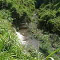 Photos: さらに上流へいってみます。場所によって流れの強弱がありました@函南町柿沢川