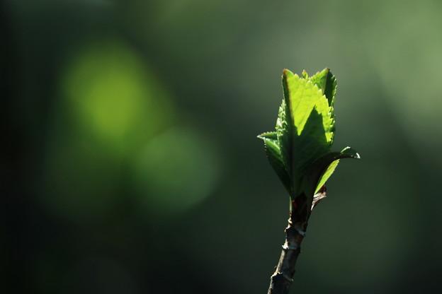 写真: 目覚めの緑