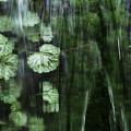 写真: 滝行