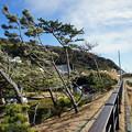 県立葉山公園と大浜海岸2