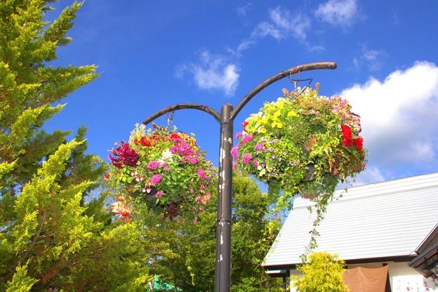 Photos: 空の花籠