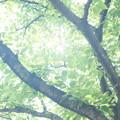 Photos: 夏が降る。