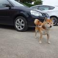 Photos: 車の番犬