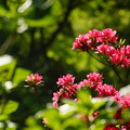 沢入駅に咲く花