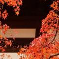 Photos: ーと紅葉