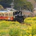 Photos: トロッコ列車が来た