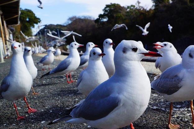 鳥鳥鳥、、