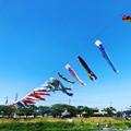 写真: 垂井鯉のぼり@インスタ風