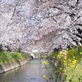 川辺に咲く