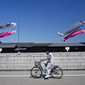 Photos: 半田運河にて