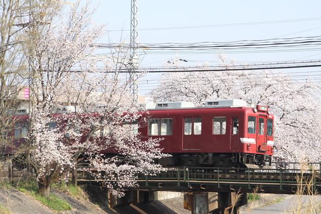 近鉄鮮魚列車×桜2018年