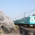 Photos: 117系×桜2018年