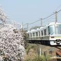 Photos: 221系×桜2018年