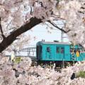 写真: 105系×桜2018年