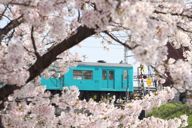 105系×桜2018年