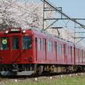写真: 養老鉄道×桜2018年