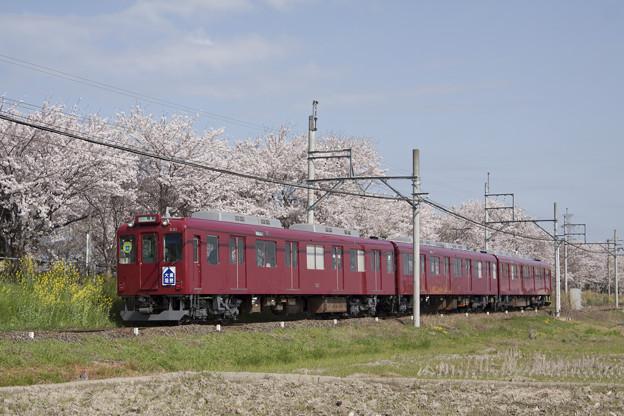 養老鉄道×桜2018年(大垣揖斐復刻板)