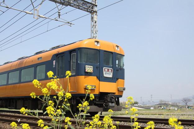 近鉄12200系(スナックカー)×菜の花