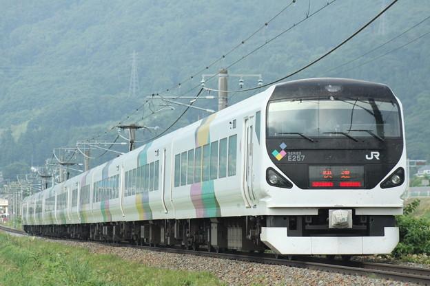 写真: E257系 快速