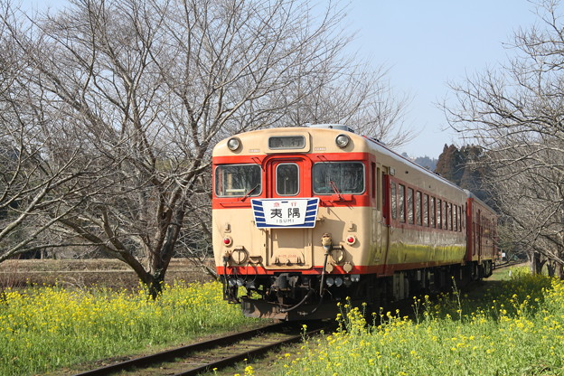 いすみ鉄道キハ28・52