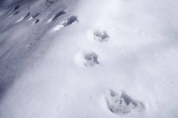 熊の足跡!