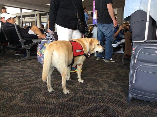 Photos: service dog