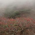 写真: 霧降る山の晩秋