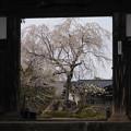資福寺の春