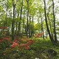 Photos: 木漏れ日の森に