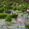 Photos: 夏の湖沼
