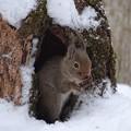 Photos: 雪宿り
