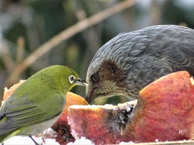 写真: 会食中
